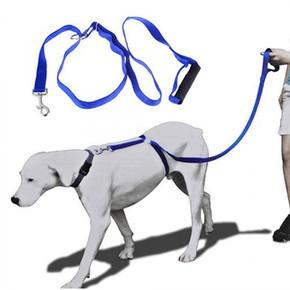 Qline - Instant Trainer Leash Köpek Tasması