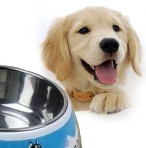 Qline - Sevimli Köpek Desenli Çelik Mama Kabı